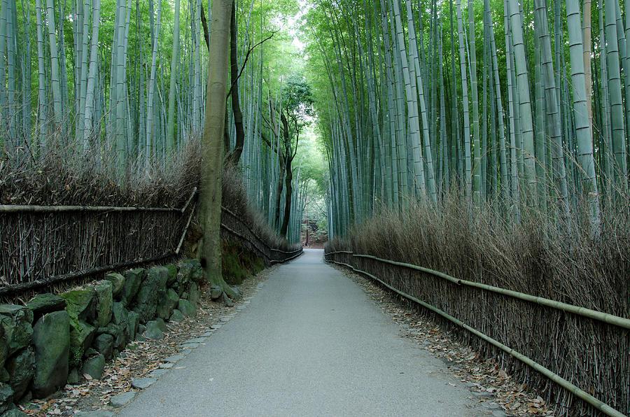 Path Of Bamboo In Arashiyama, Kyoto Photograph by Kaoru Hayashi