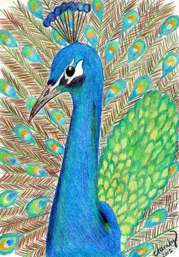 Peacock Drawing - Peacock by Carol Hamby