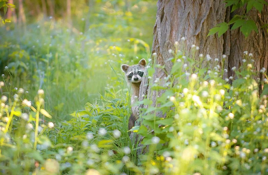 Peek-a-boo Photograph - Peek A Boo by Carrie Ann Grippo-Pike