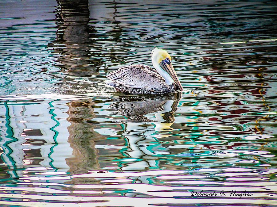 Pelican by Deborah Hughes