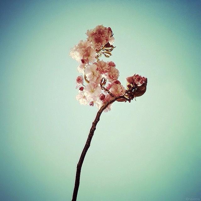 Flower Photograph - Petite Spring by Natasha Marco