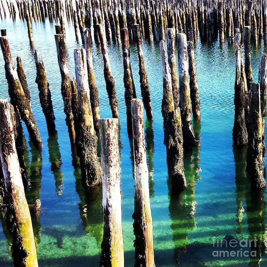 Pier Pilings Photograph by Samantha Baker