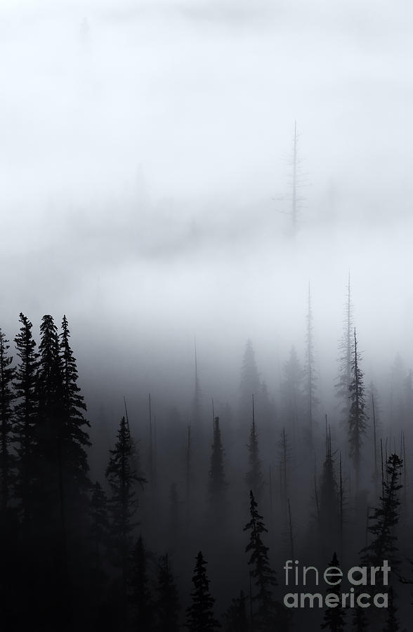 Forest Photograph - Piercing The Clouds by Mike  Dawson