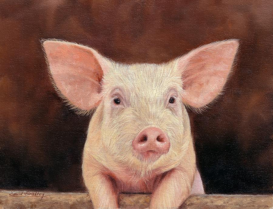 Pig Painting - Pig by David Stribbling