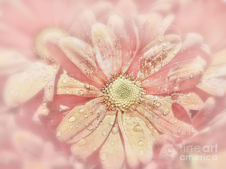Flower Photograph - Pink Blush  by Andrea Kollo