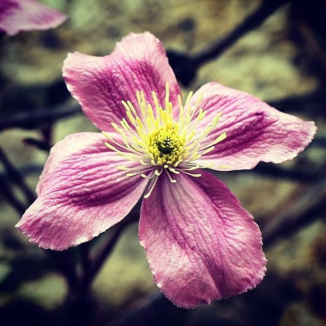 Flower Photograph - Pink Flower by Luisa Azzolini