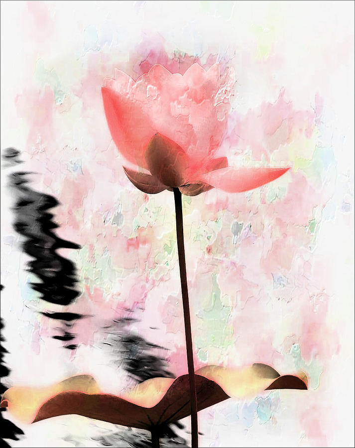 Pink Lotus by Carol Kinkead