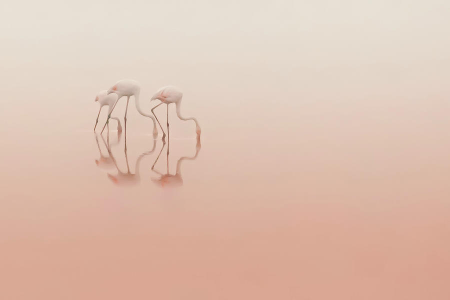 Wildlife Photograph - Pink Silence... by Natalia Rublina