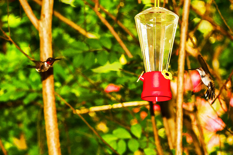 Pit Stop Photograph - Hummingbirds - In Flight - Pit Stop by Barry Jones