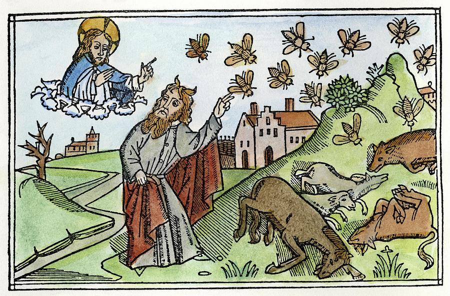 Plague Of Flies
