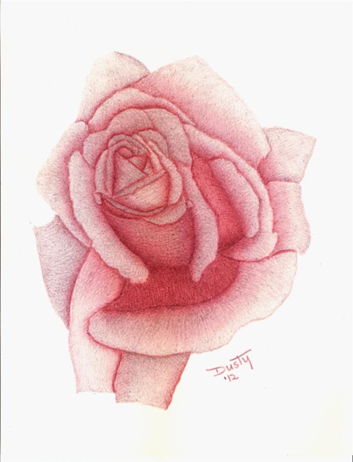 Rose Drawing - Plum Pudding by Dusty Reed