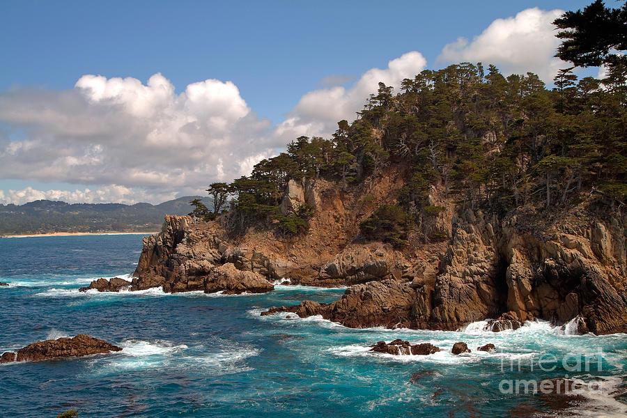 Point Lobos Photograph