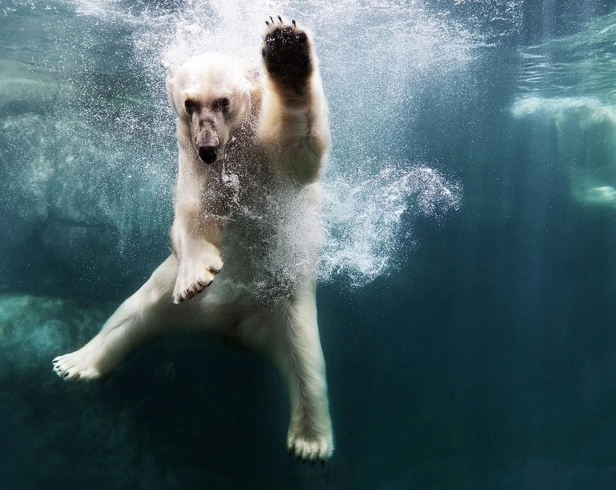 Polarbear In Water Photograph by Henrik Sorensen