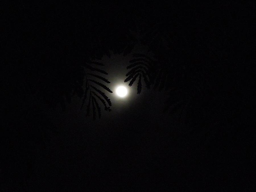 Poonams Night Photograph by Prakash Leuva