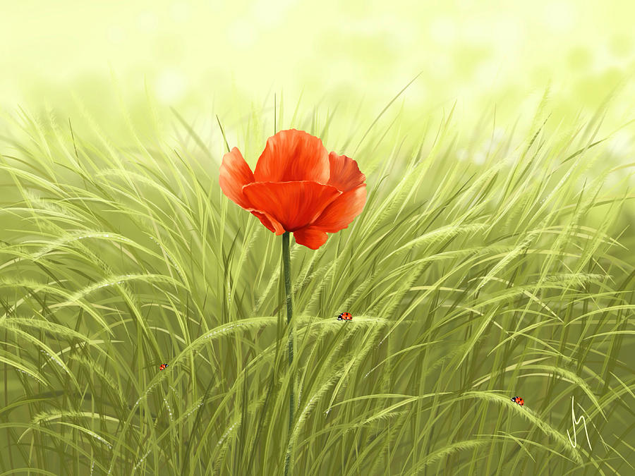 Flower Digital Art - Poppy by Veronica Minozzi