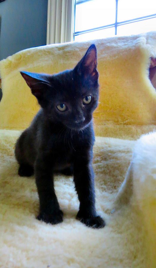 Cat Photograph - Posing  by Art Dingo