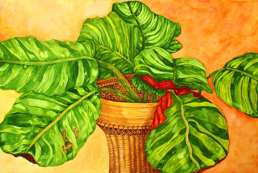 Prayer Plant by Ashley Goforth