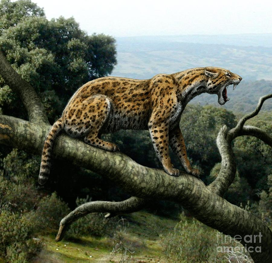 Animal Photograph - Promegantereon Sabretooth Cat by Mauricio Anton