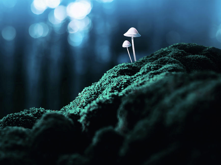 Psychedelic Mushrooms Photograph by Misha Kaminsky