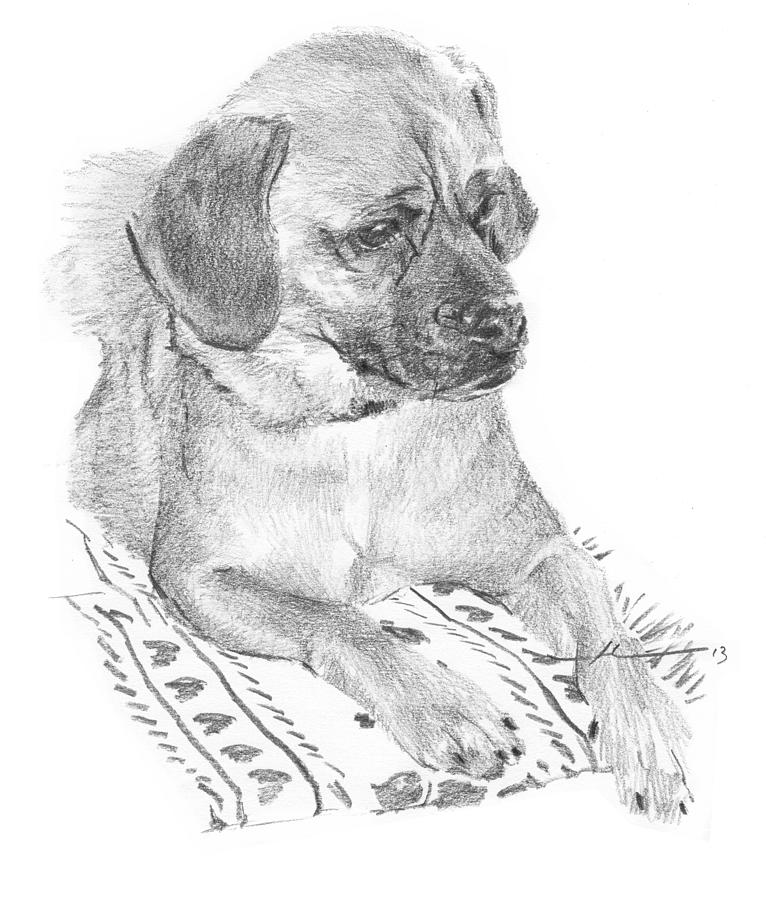 Puppy On A Blanket Pencil Portrait Drawing by Mike Theuer
