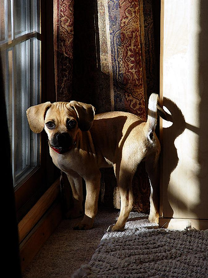 Puggle Dog Portrait Painting by Olde Time  Mercantile