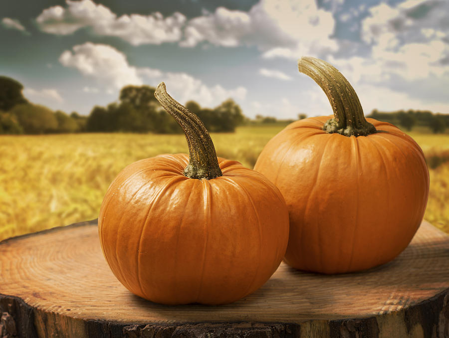 Pumpkin Photograph - Pumpkins by Amanda Elwell