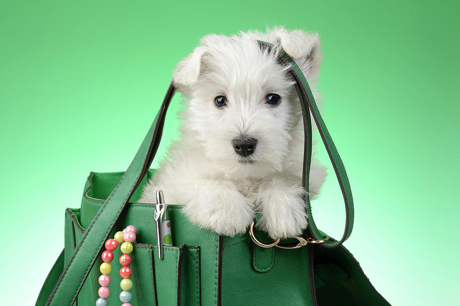 Puppy Painting - Puppy Green Bag 2 by MGL Meiklejohn Graphics Licensing