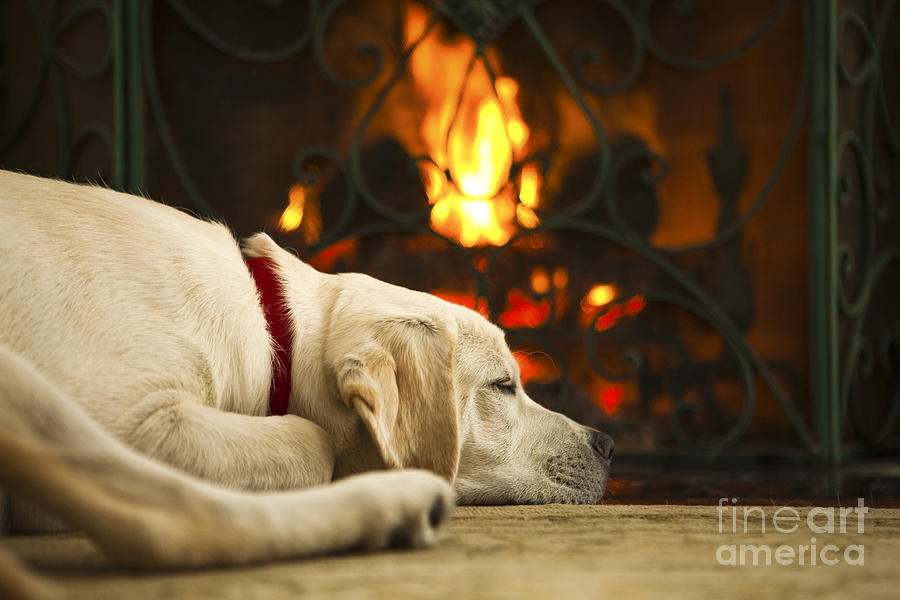 Puppy Sleeping By The Fireplace Photograph By Diane Diederich
