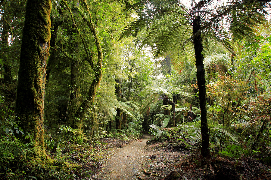 Trail Photograph - Pureora Forest by Les Cunliffe