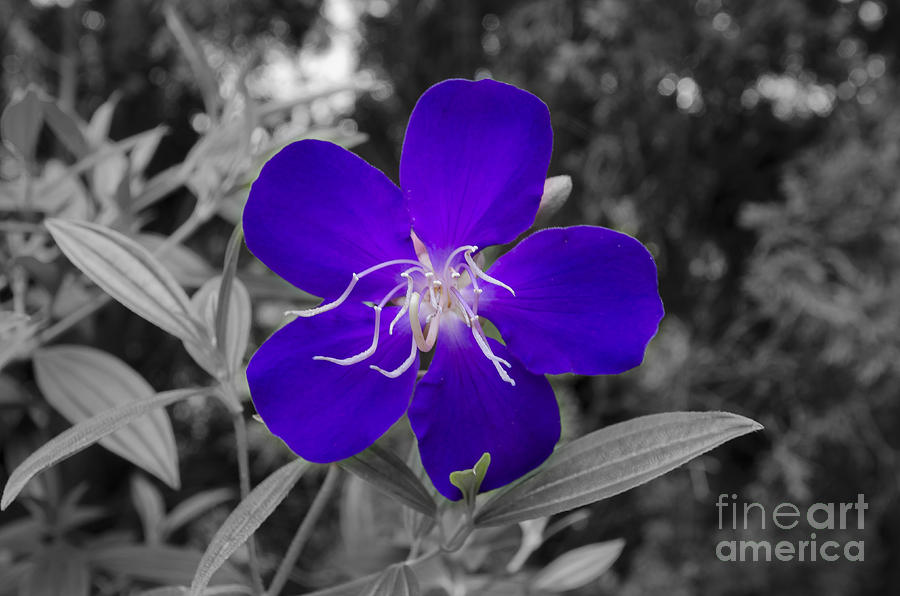 Abstract Photograph - Purple Passion by Joe McCormack Jr