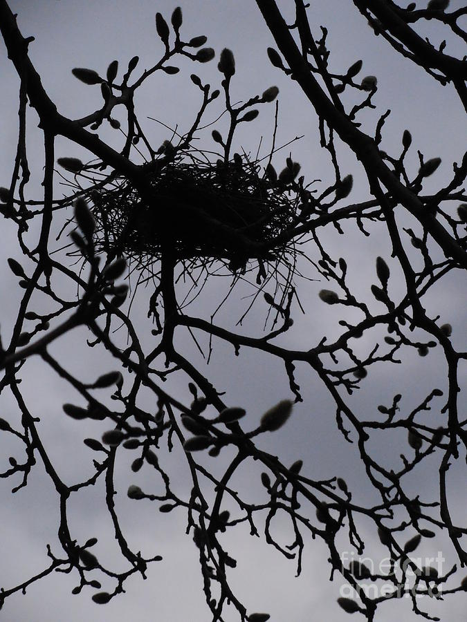 Magnolia Photograph - Put A Bird In It I by Rowena Throckmorton