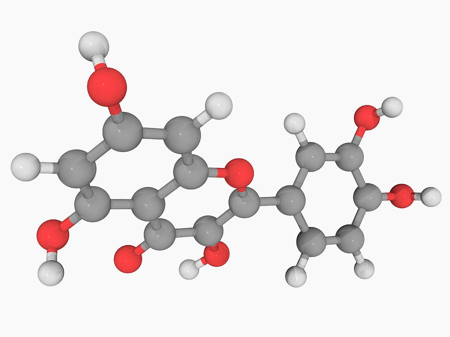 Artwork Photograph - Quercetin Molecule by Laguna Design/science Photo Library