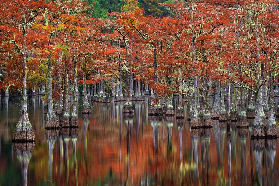 Cypress Photograph - Quiet Cove by Chris Moore