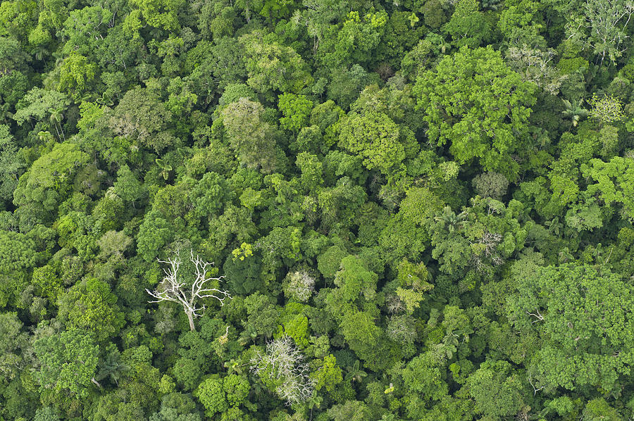 Rainforest Canopy Yasuni Ecuador Photograph by Pete  Oxford