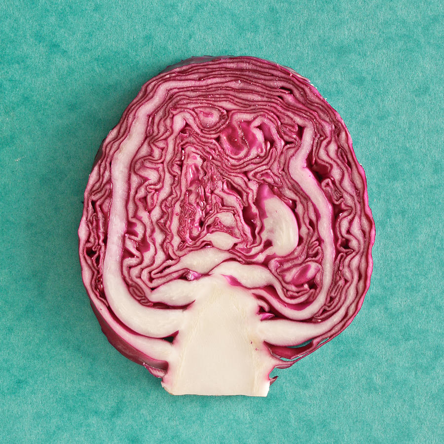 Autumn Photograph - Red Cabbage by Tom Gowanlock