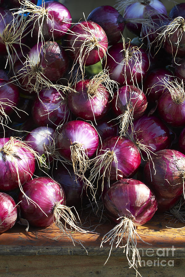 Red Onions Photograph