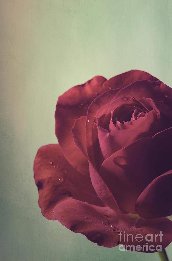 Vintage Pyrography - Red Rose by Jelena Jovanovic