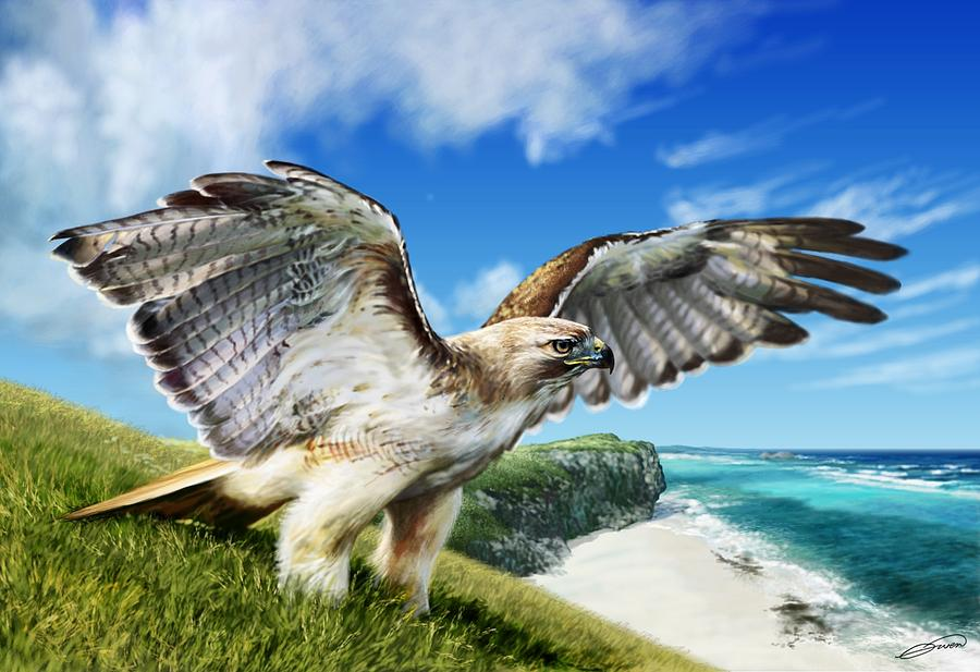 Red Tailed Hawk Digital Art - Red-tailed Hawk by Owen Bell