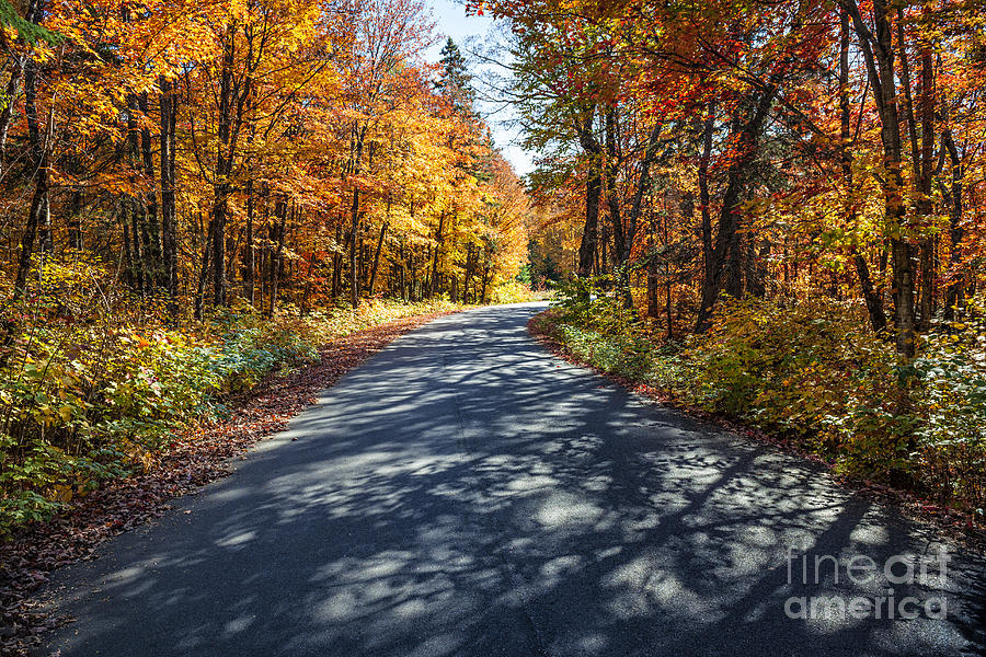 Road Photograph - Road in fall forest by Elena Elisseeva