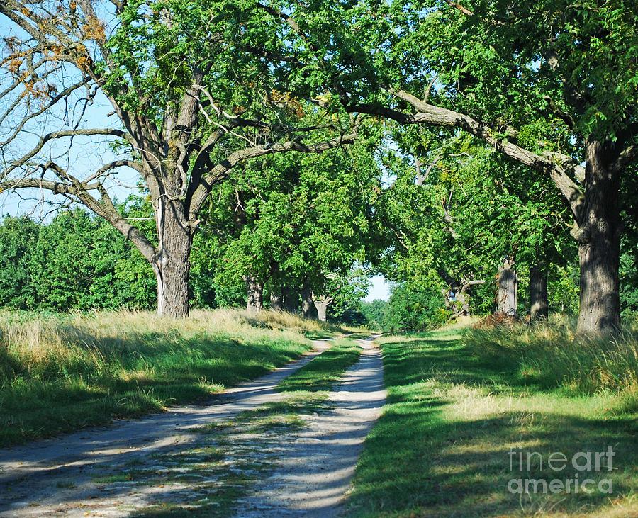 Tree Photograph - Road by Sarka Olehlova