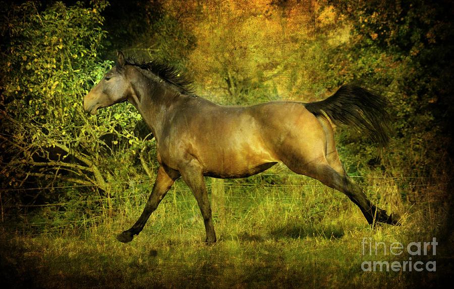Horses Photograph - Running Free by Angel Ciesniarska