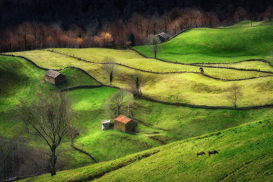 Cantabria Photograph - Rural Life by Oskar Baglietto
