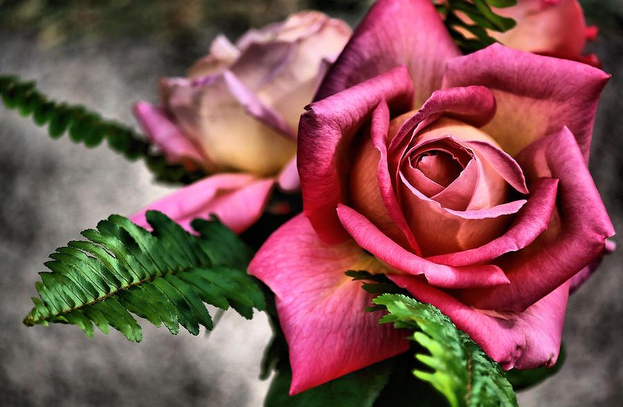 Flower Photograph - Rustic Rub by Karen Scovill