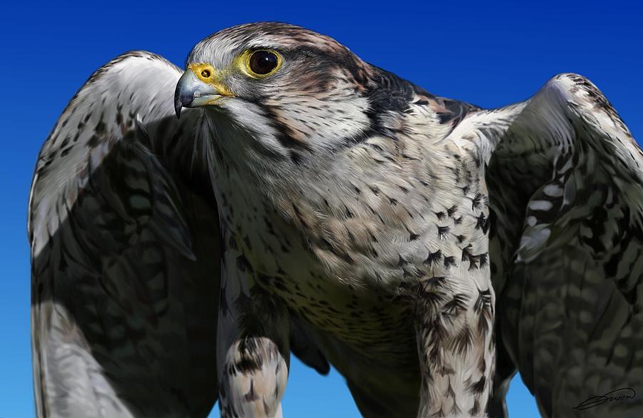 Saker Falcon Digital Art - Saker Falcon by Owen Bell