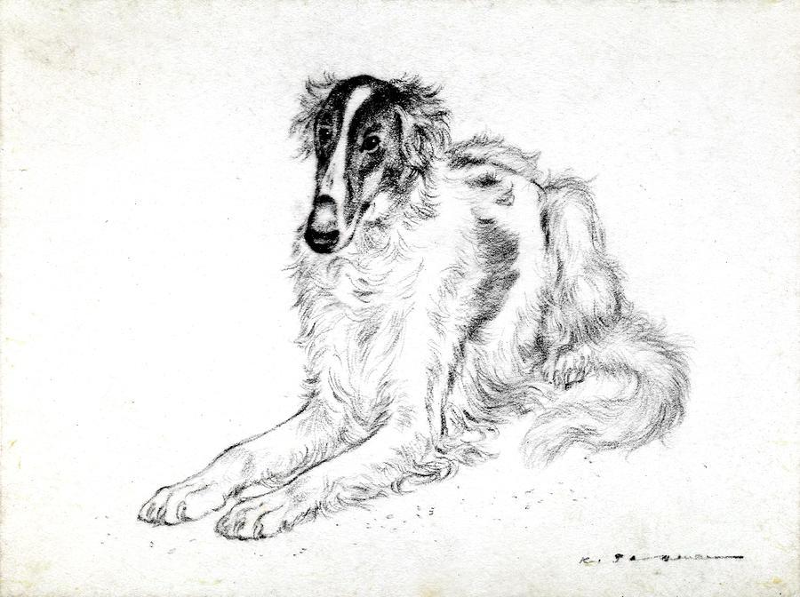 Saluki Pastel - Saluki by Kurt Tessmann