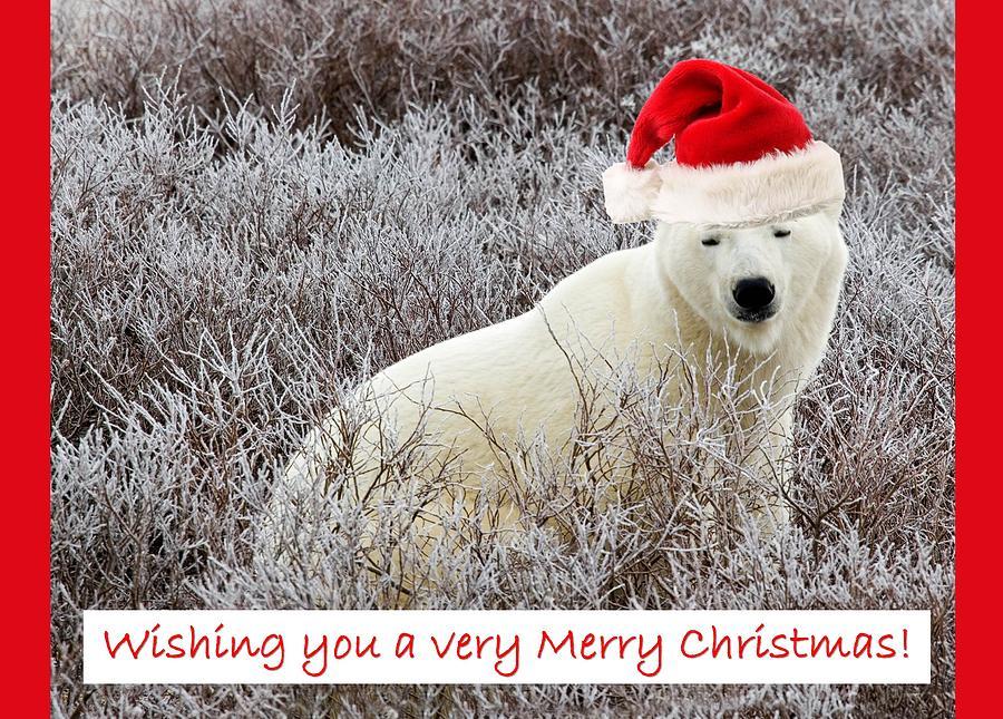 Santa Photograph - Santa Bear by Craig Brown