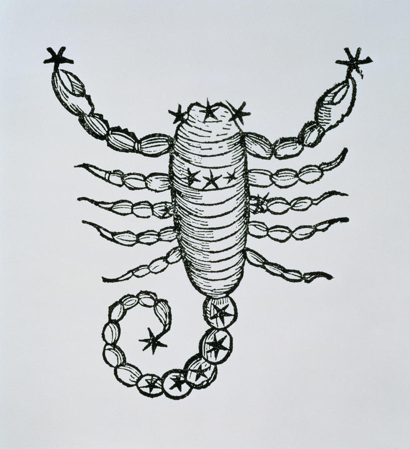 Scorpio Drawing - Scorpio by Italian School