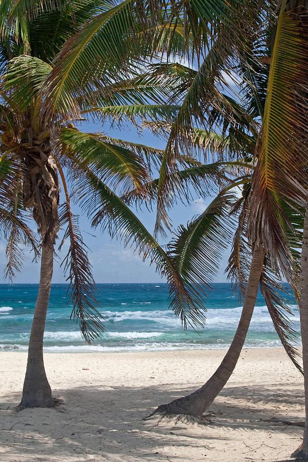 Serene Caribbean Beach  by Sven Brogren