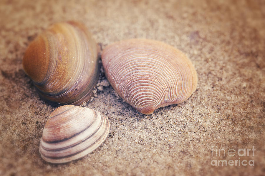 Shell Photograph - Shells  by LHJB Photography