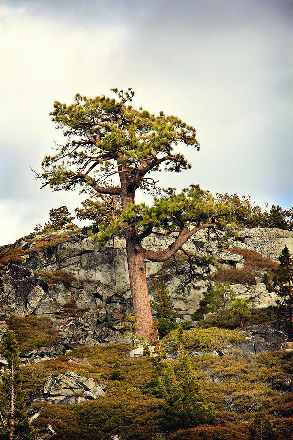 Pine Photograph - Sierra Landscape by Shawn McMillan